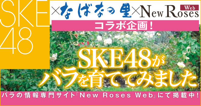New Roses Web